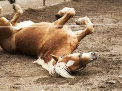 Agriturismo 'L Perol - cavalli